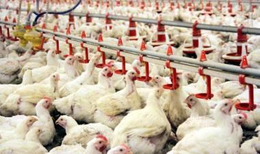 Tavuk Çiftliği Açmak